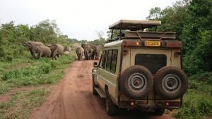 Game Drive in Akagera National Park